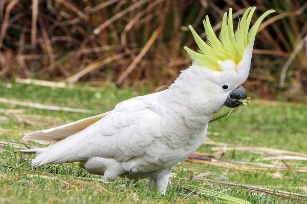 Птица высокого интеллекта