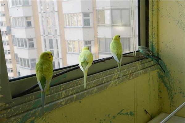 Птички на свободе