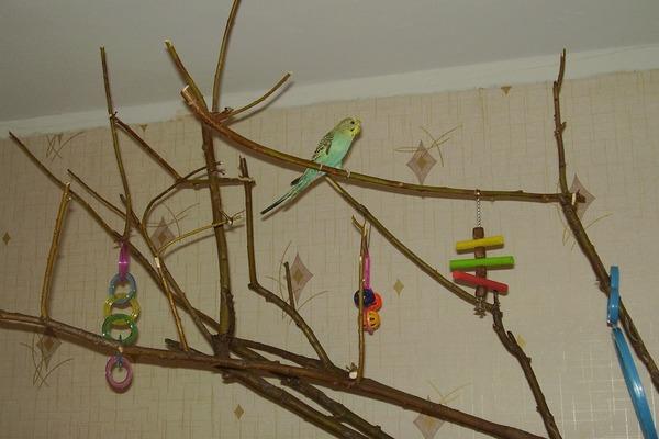Особые лакомства для птиц