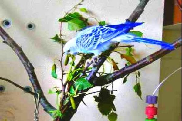 Ветки для разнообразия рациона птиц