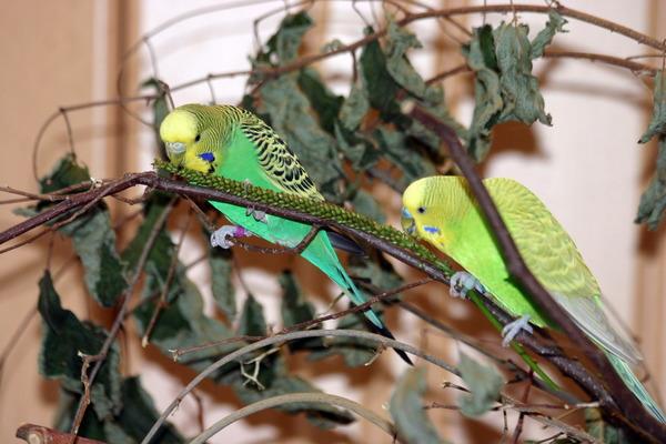 Ветки и сушеная трава для попугаев