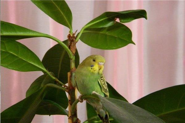 Комнатные растения и попугай
