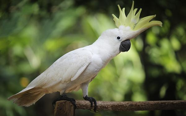 Крупная красивая экзотическая птица