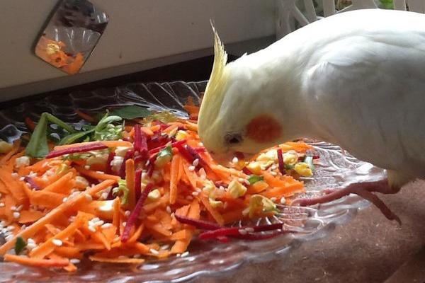 Питание попугая