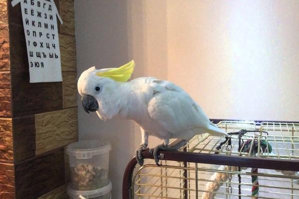 Содержание попугая в неволе