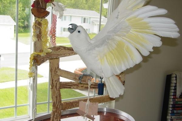 Попугай на свободе