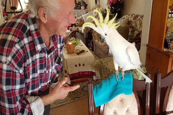 Попугай иногда может укусить