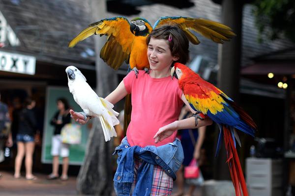 Попугаи очень любопытные и импульсивные птицы