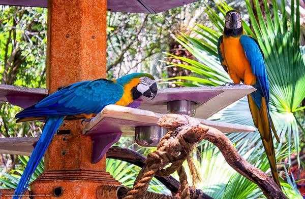 Пернатые питомцы ара