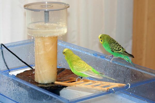 Купалка для попугаев