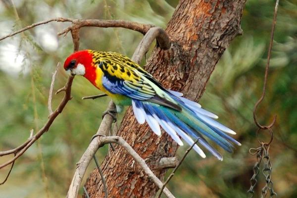 Необычная экзотическая птица