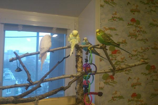 ДЛя попугаев важен солнечный свет