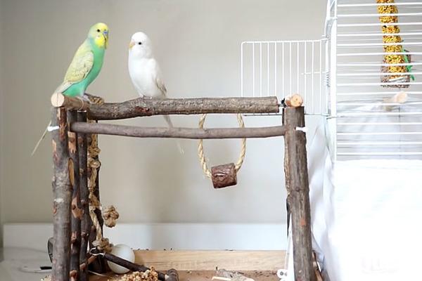 Соблюдаем влажность воздуха для птиц