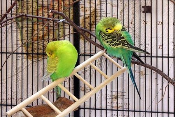 Попугайчики отдыхают