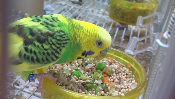 Попугай любит лакомится вкусностями