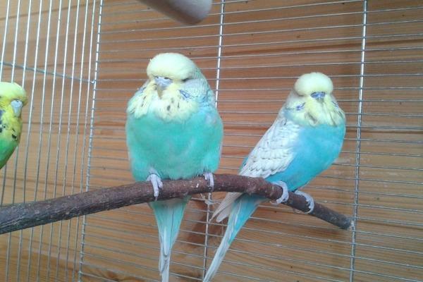 Условия содержания птиц