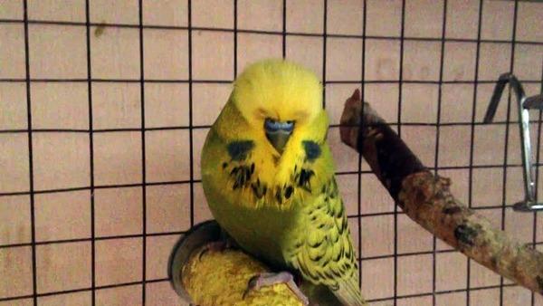 Птичка чех любит свободу передвижения