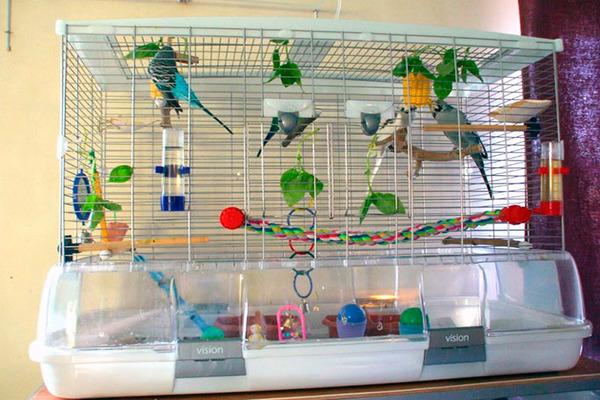 Обустройство клетки для попугайчиков
