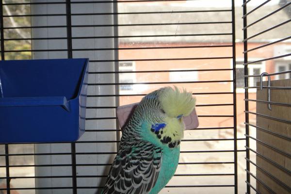 У попугая ринит