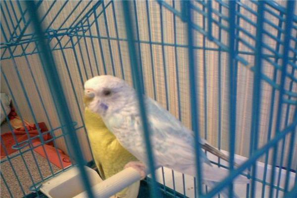 У птички уязвимая нервная система