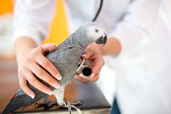 Консультация в орнитолога