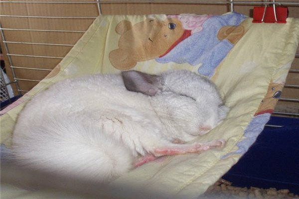 Сладкий сон в гамаке