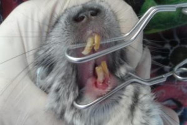 Лечение болезни зубов