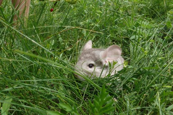 Животное среди зеленой растительности