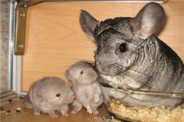 Малыши учаться кушать обычную пищу