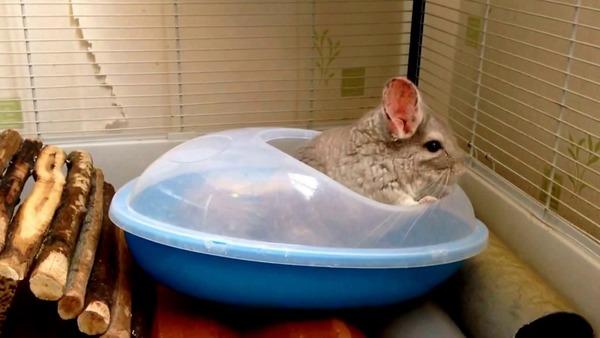 Животное не хочет купаться