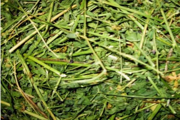 Заготавливаем сено для пушистого питомца