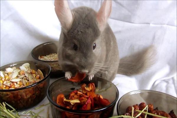 Пищевые смеси для животного