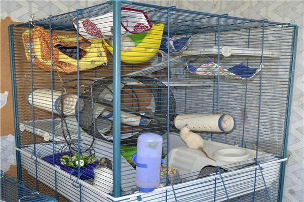 Клетка для крыса-мальчика