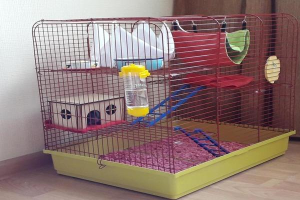 Клетка для крысы-девочки