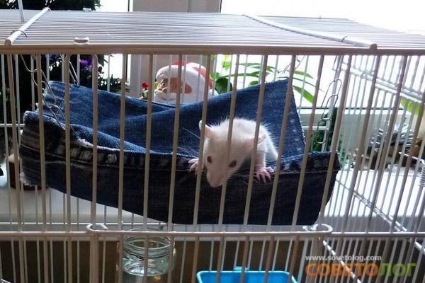 Потенциальная постель для зверька
