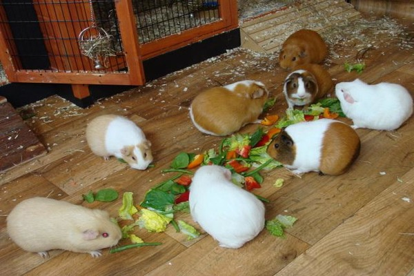 Домашние питомцы во время еды