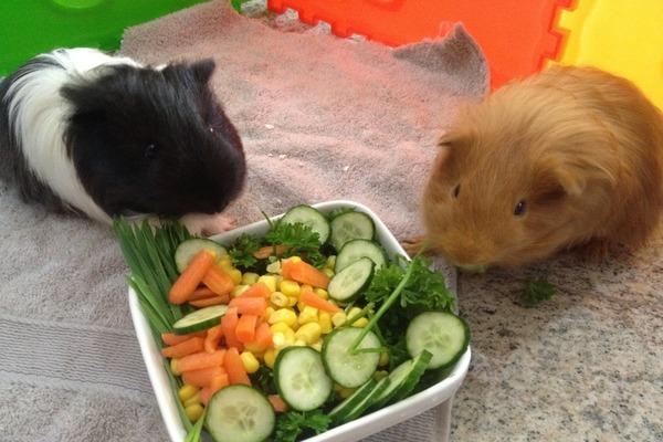 Овощи в рационе морских свинок