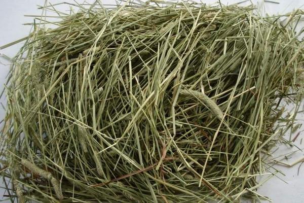 Заготавливаем сено для своего питомца