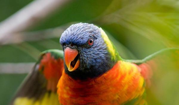 Наблюдение за птицей поможет понять причину открытости клюва