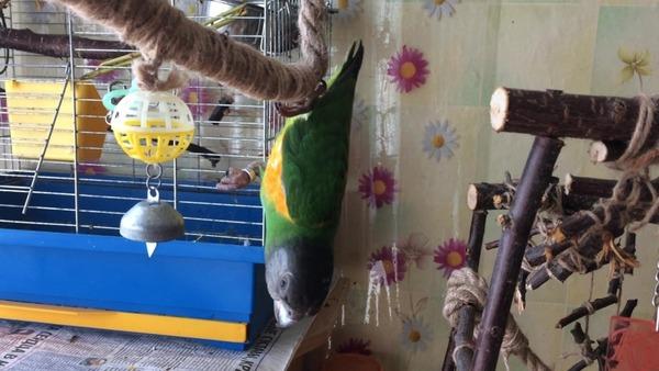 Формируем внутреннее убранство жилья попугая