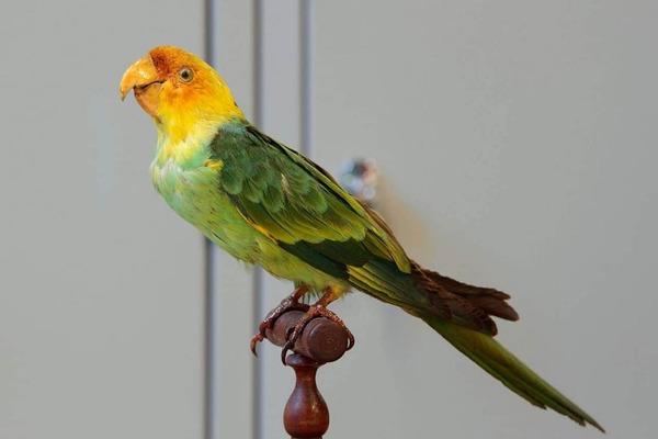 Яркое оперение - одна из причин истребления птиц