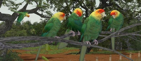 Каролинские попугаи были истреблены человеком