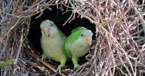 Гнездование пернатых