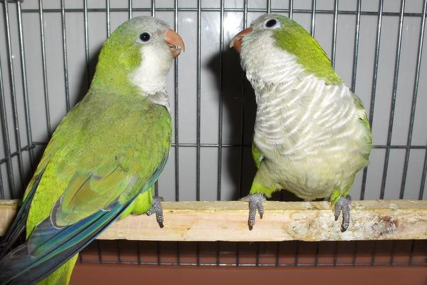 Птицы общаются между собой