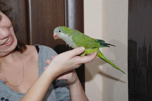 Учим птицу воспроизводить человеческую речь