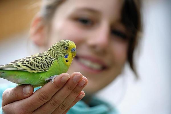 Учить разговаривать попугаев нужно регулярно