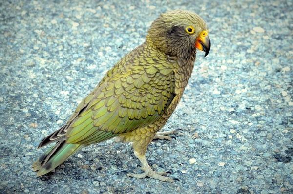 Наиболее умные хищные птицы