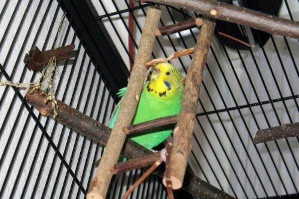 Жердочки для попугая