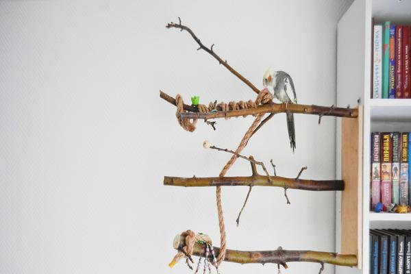 Жердочки - обязательная часть жилища попугая