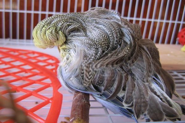 Попугай заболел